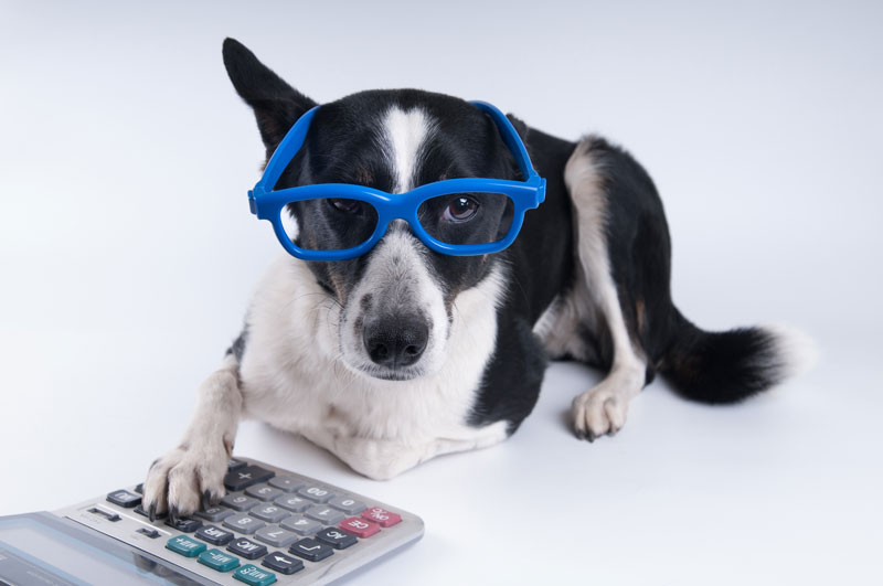 Kevin Roberts' Under-Utilized Pet Tax Deductions
